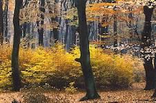 herfst verzamelsite